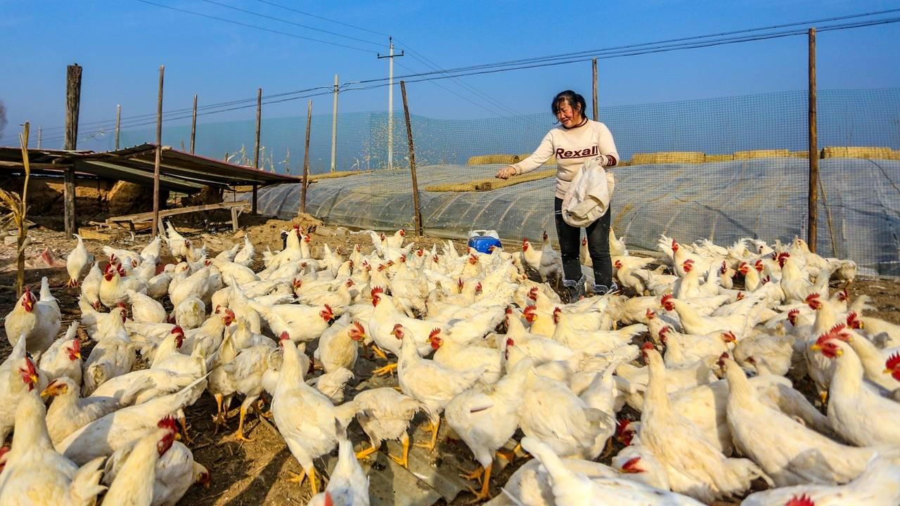 China relata primeiro caso em humano da cepa H10N3 da gripe aviária