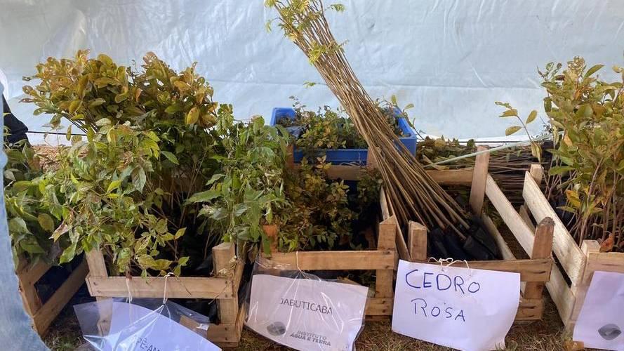 Estado doa 1 milhão de mudas para arborização e recuperação de áreas em Cascavel