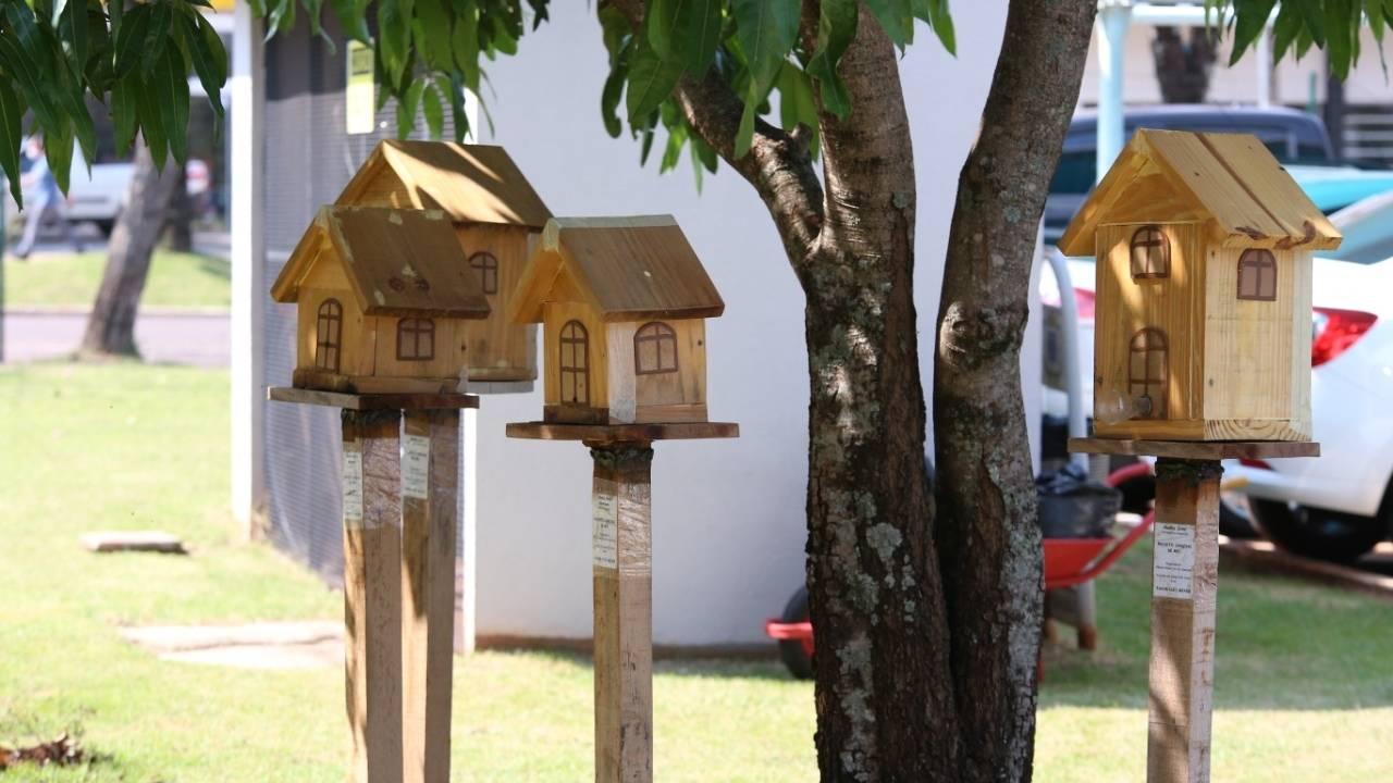 Projeto Jardins de Mel: incentivo à criação de abelhas sem ferrão é aprovado
