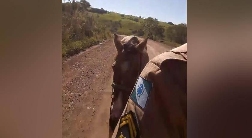 Fuga estilo Faroeste: Jovem furta veículo e gasolina acaba; égua é usada na fuga
