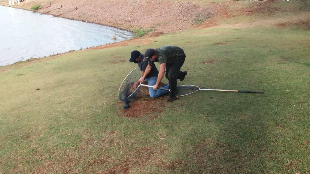 Secretaria do Meio Ambiente faz atendimento a capivara machucada no Lago