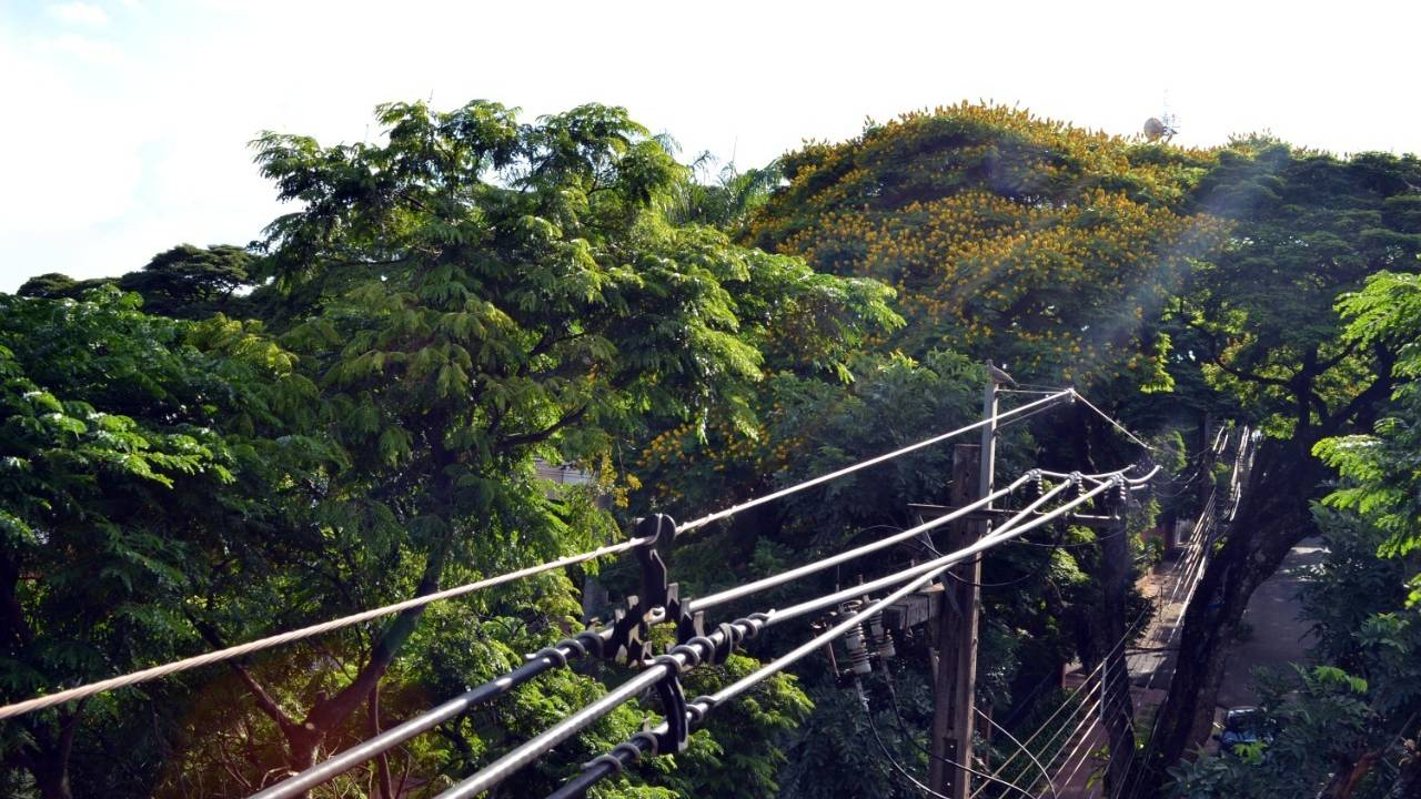 Plantio de árvores: espécies inadequadas interferem na infraestrutura do município