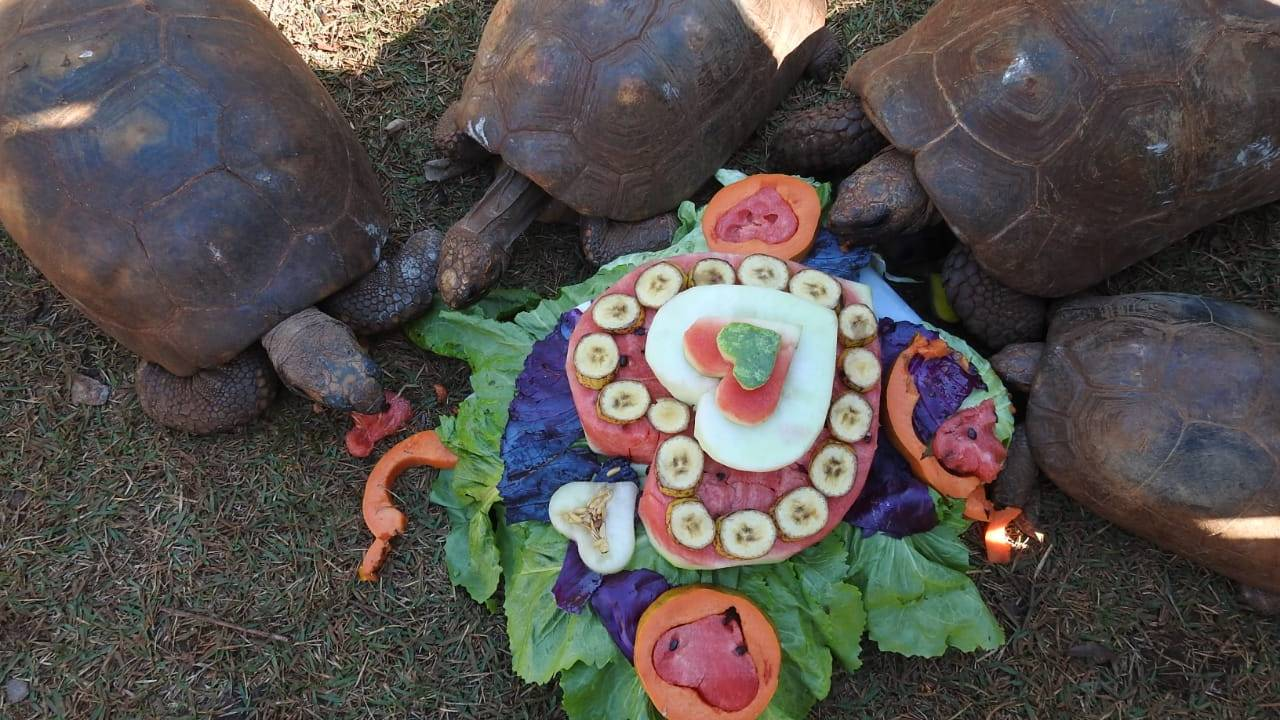 Dia dos Namorados é tema de enriquecimento ambiental temático no zoo