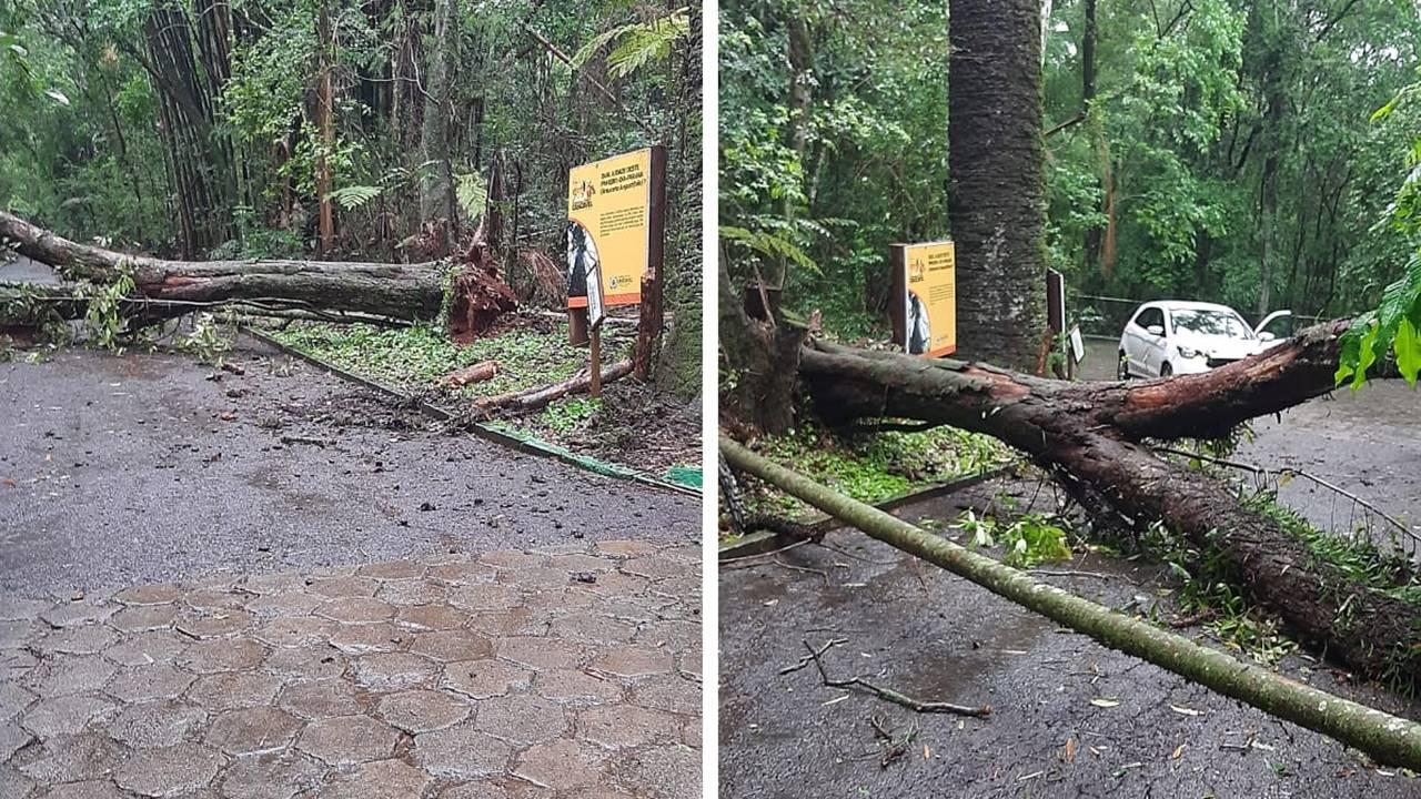 Zoológico Municipal de Cascavel não irá abrir neste domingo (10)