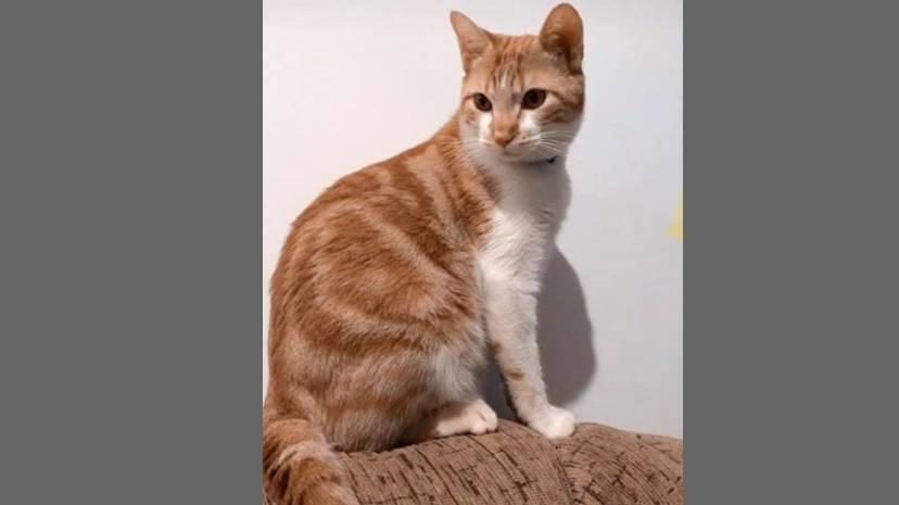 Você viu esse gatinho? está desaparecido no Bairro Canadá