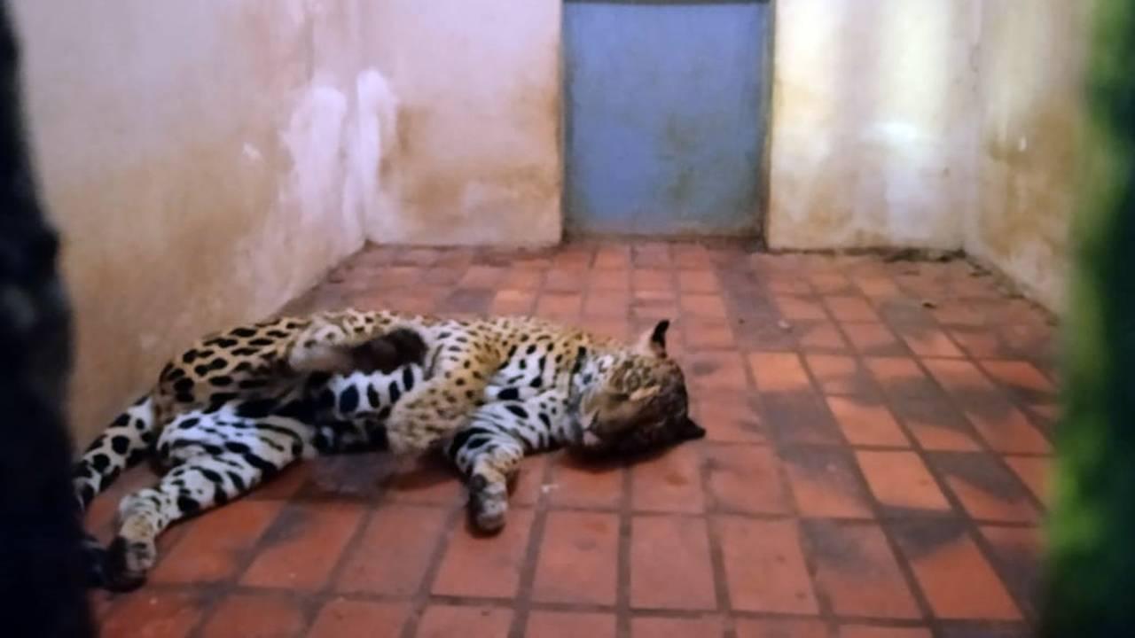 Parte dos animais do Bosque Guarani serão transferidos para Cascavel