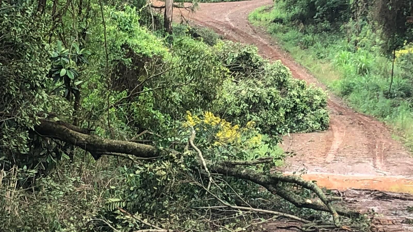 Agro: Falta de energia na área rural compromete produção na região oeste do Paraná