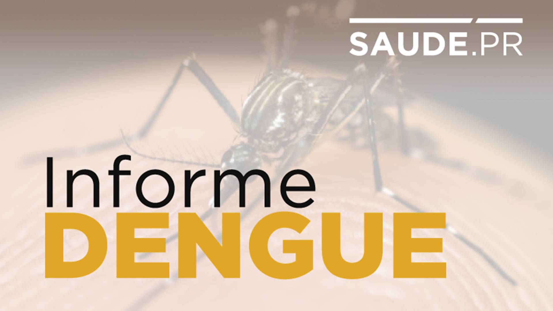 Informe semanal da dengue registra 605 novos casos