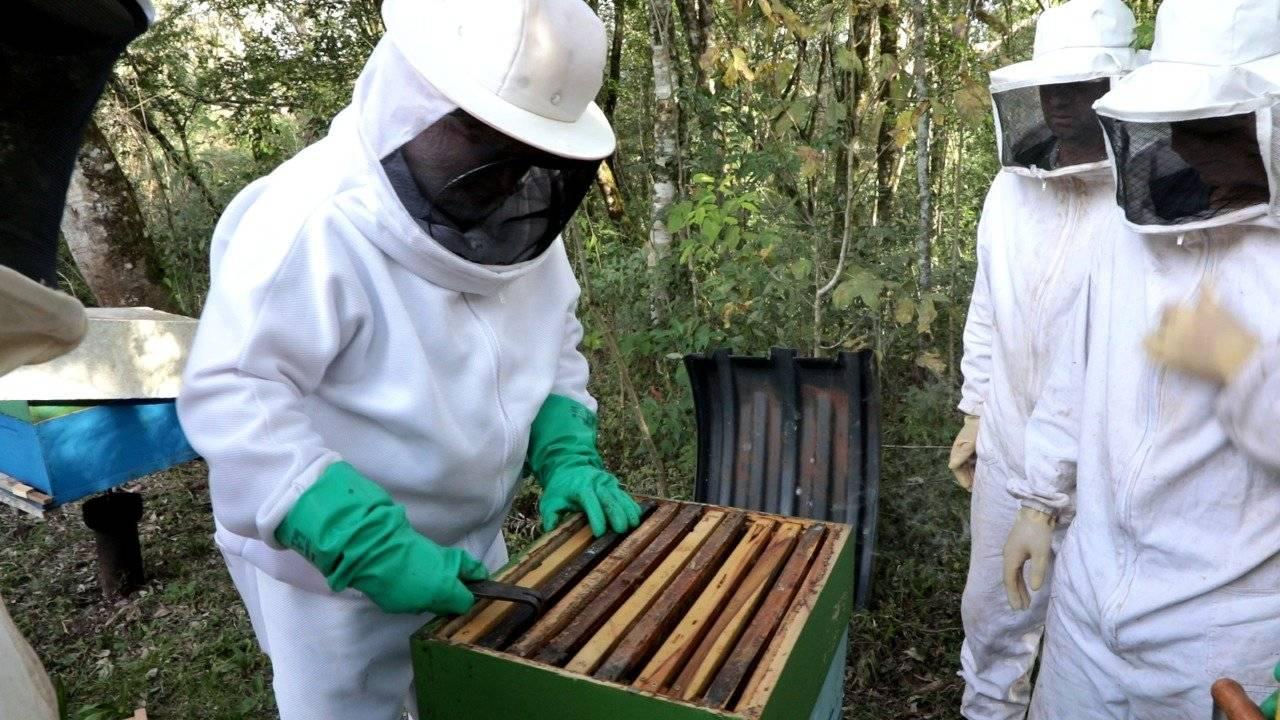Defesa Civil conclui capacitação de apicultura na Agrotec