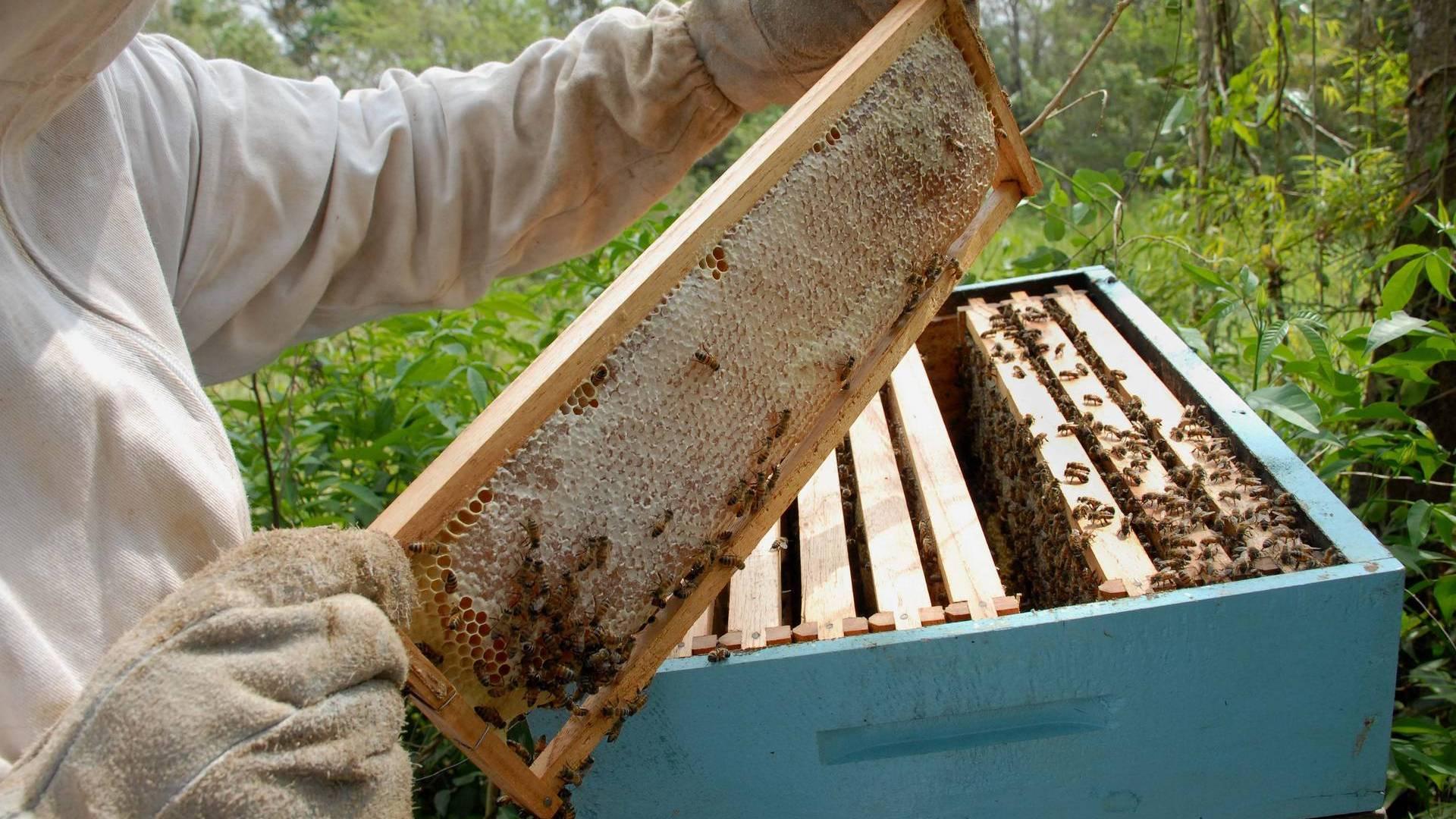 Paraná inicia 2021 como segundo maior exportador de mel in natura