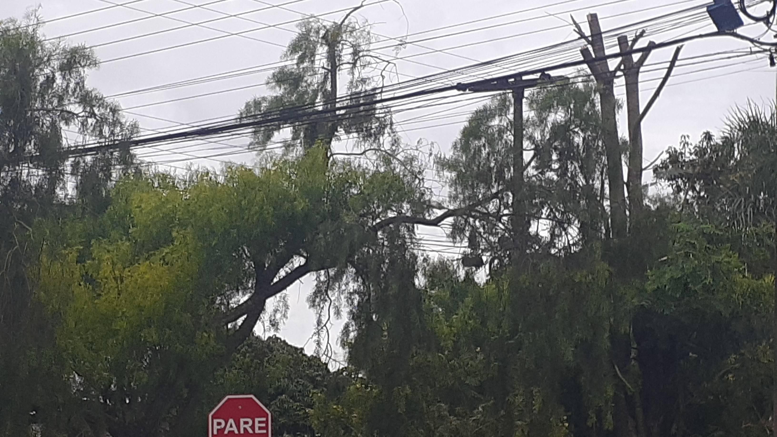 Queda de galho de árvore na rede elétrica deixa parte do Bairro Períolo, sem luz