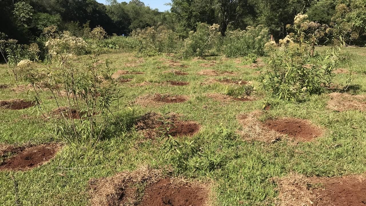 Legado verde: em dez anos, Itaipu plantou quase 775 mil mudas de árvores