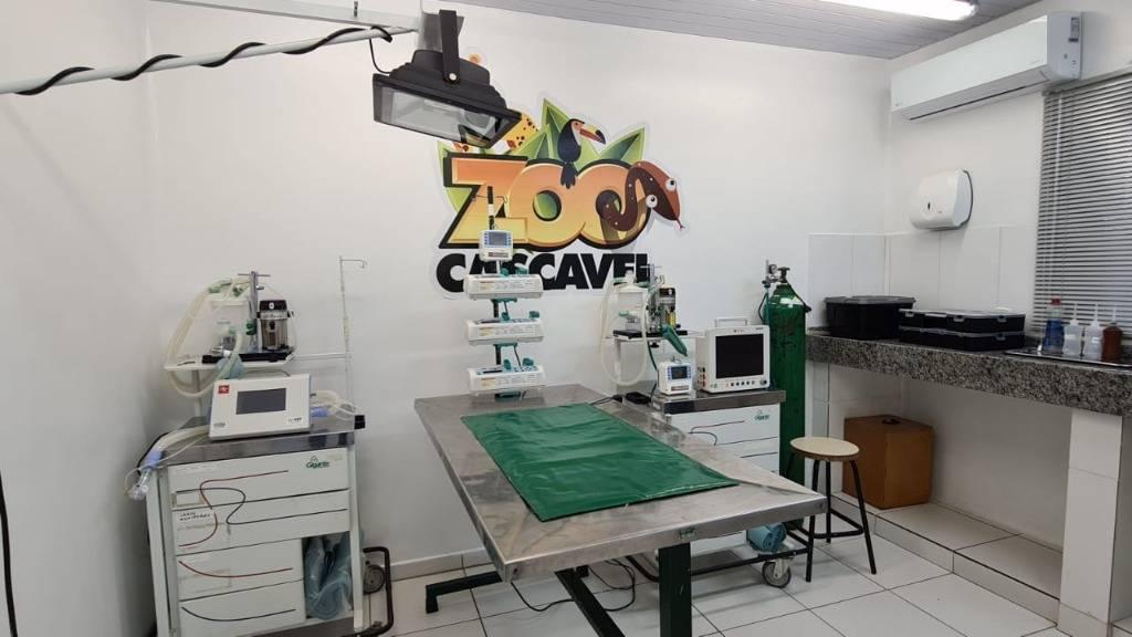 Animais do zoo tem tratamento de qualidade em ambulatório