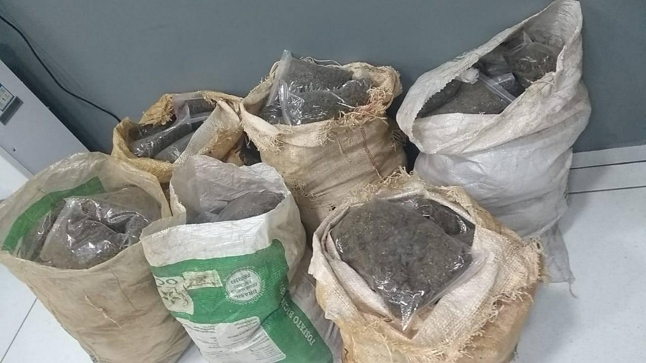 Denarc de Cascavel realiza apreensão de 61,3 quilos de 'skunk' em Nova Laranjeiras