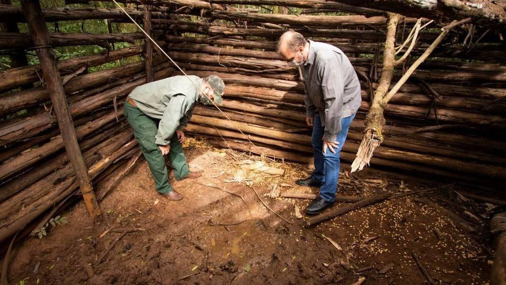 Projeto analisa zoonoses relacionadas a javalis em parques do Paraná