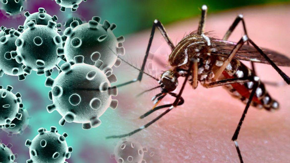 Paraná confirma laboratorialmente primeiro caso de co-detecção de Covid-19 e Dengue