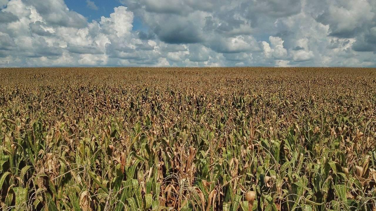 Deral prevê produção de 5,9 milhões de toneladas de milho na segunda safra 2020/21