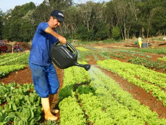 Dia do Agricultor: Cascavel e distritos possuem 86 hortas comunitárias