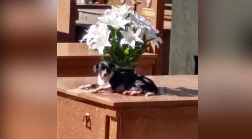Cachorro está há 8 meses morando no túmulo do dono em cemitério no Paraná