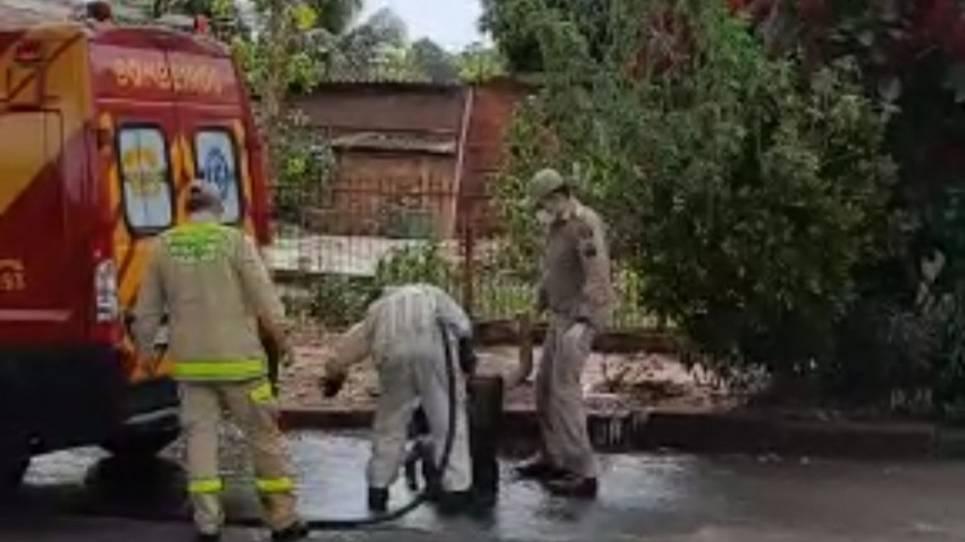 Idoso morre após sofrer ataques de abelhas por dois dias seguidos em Paranavaí
