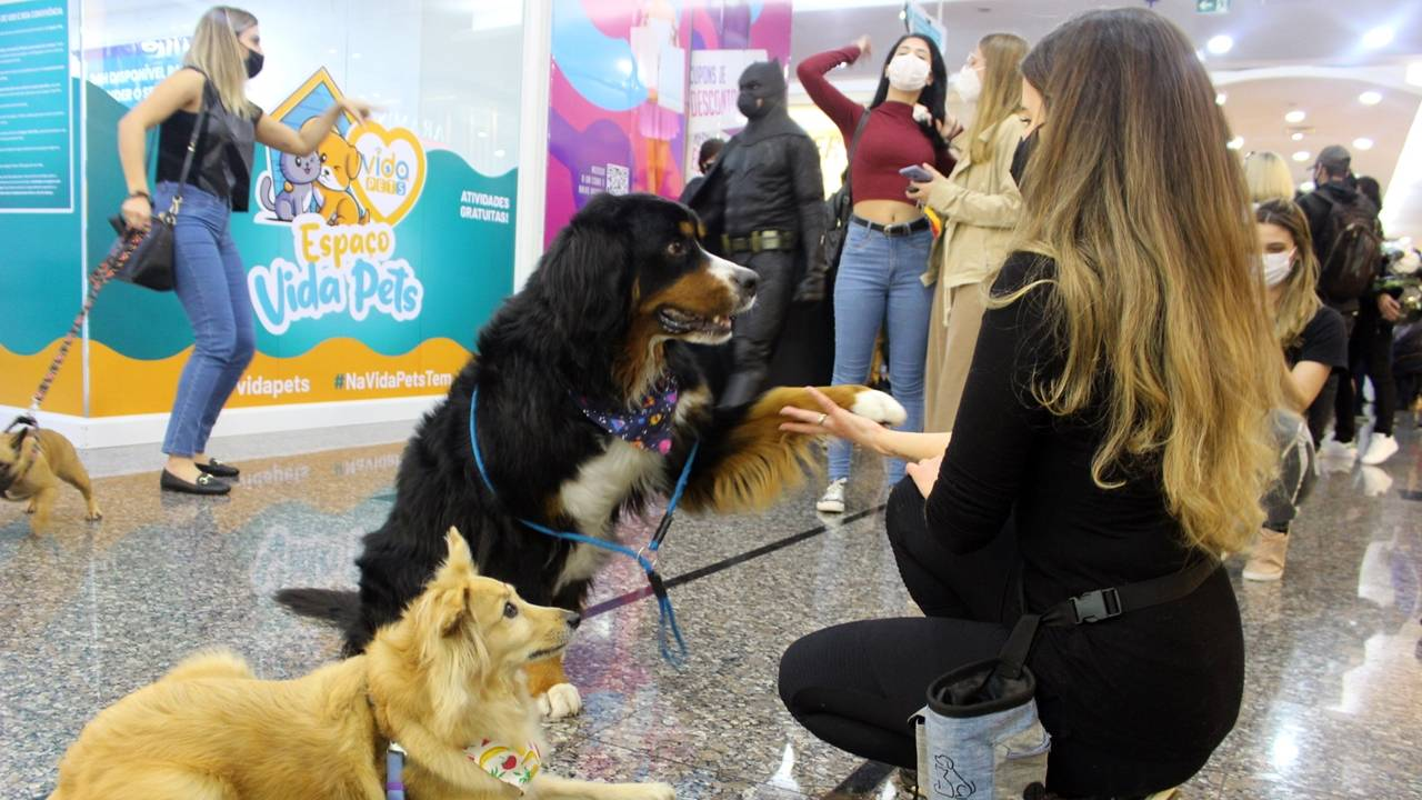 Campanha de férias gratuita de shopping cascavelense inclui atividades para os pets
