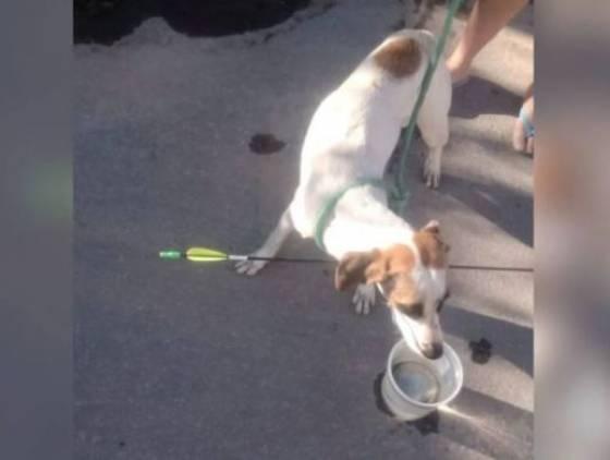 Cachorro é atingido por flecha e recebe socorro do Corpo de Bombeiros