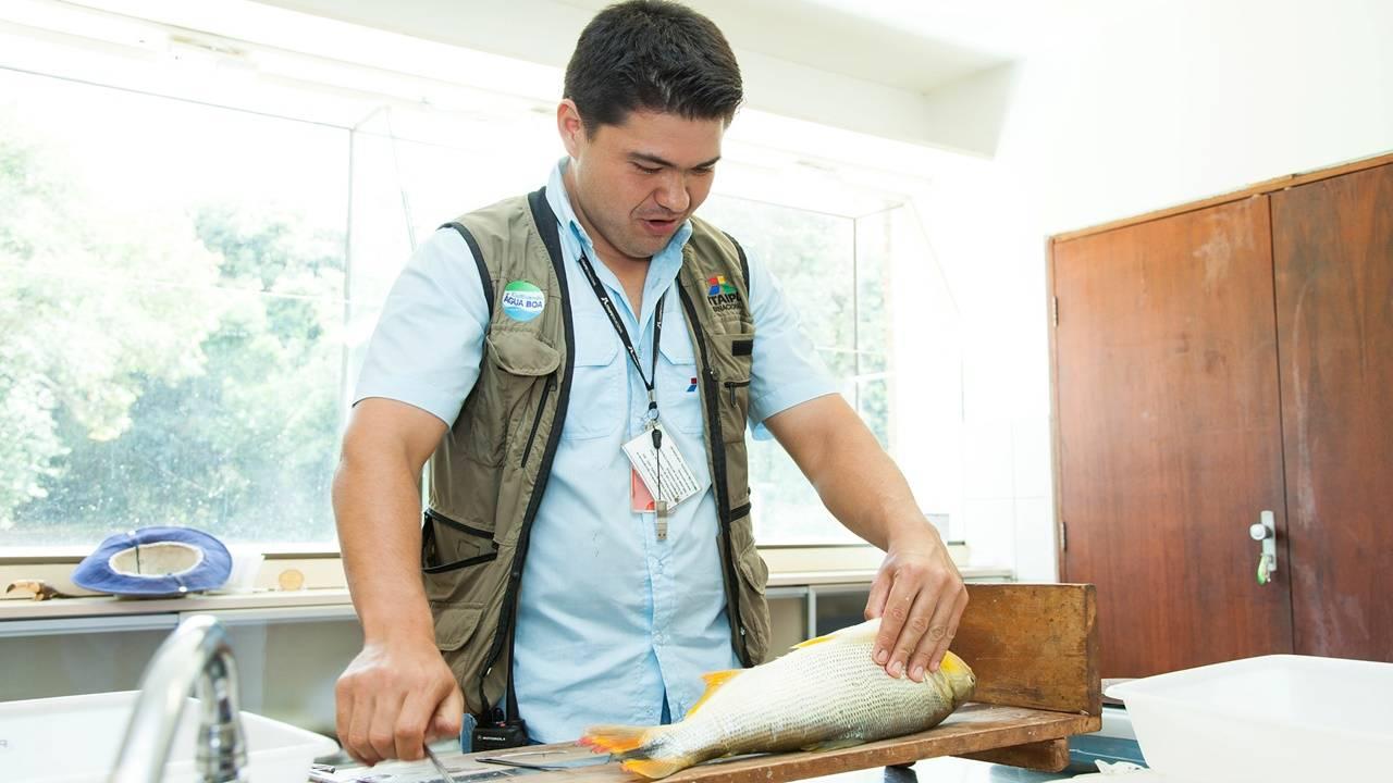 Estudo inédito da Itaipu e UFPR propõe protocolo para abate humanitário de peixes