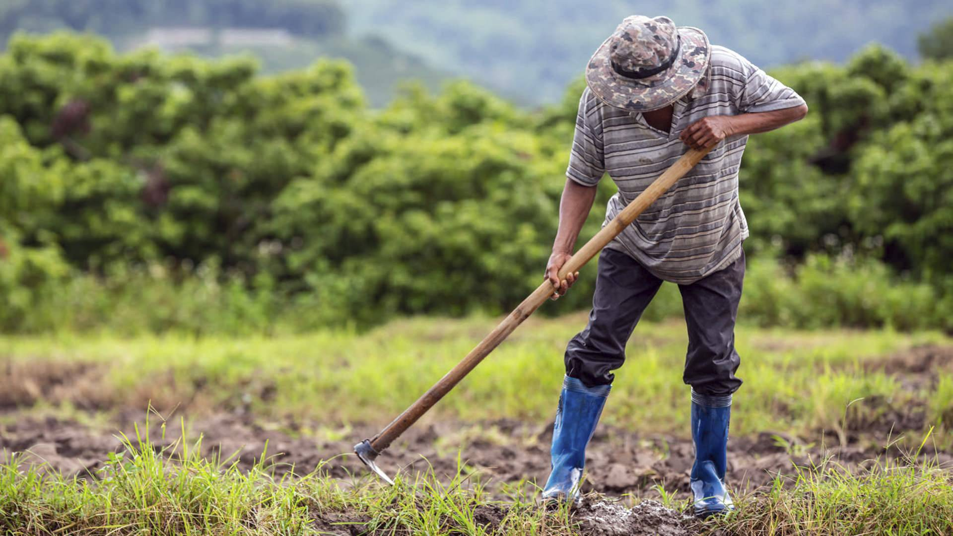 Prazo para declarar ITR (Imposto Territorial Rural) encerra dia 30