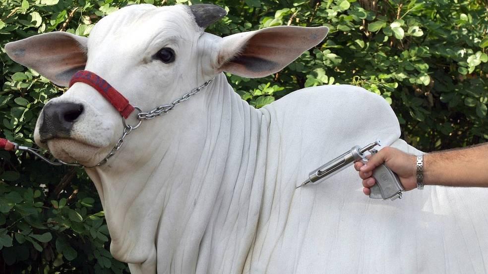 Cascavel registra caso de raiva bovina