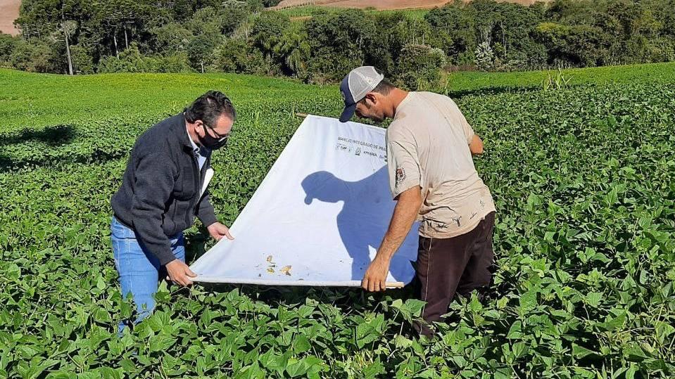 Software que auxilia no controle de pragas da soja será expandido para o feijão